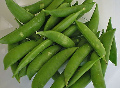 Vegetable Pea Delikett  Sugar Snap 110 Seeds  Super Sweet ** Free Uk P&P**