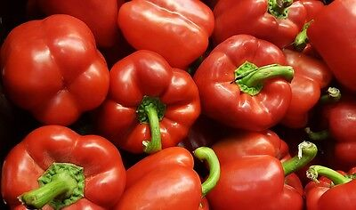 150 BIG RED BELL PEPPER Sweet Capsicum Annuum Vegetable Seeds *Comb Ship & Gift