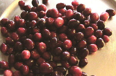 10+ Cranberry Seeds -Cold Stratified