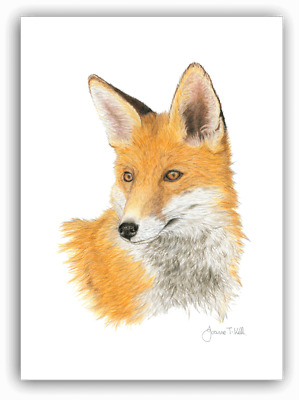 'RED FOX' WILDLIFE GREETINGS CARD - Print From Original Drawing By Joanne T Kell