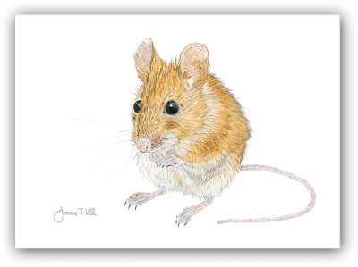 WOOD MOUSE WILDLIFE GREETINGS CARD -Print From Original Drawing By Joanne T Kell