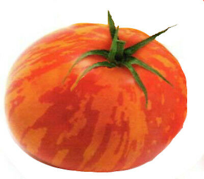 """HEIRLOOM TOMATO SEEDS """"Tigerella"""" 25  seeds superior flavour Large yield"""
