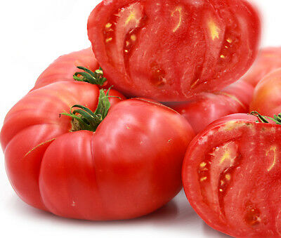 TOMATO SEEDS Brandywine Red 25 seeds HEIRLOOM Tomato HUGE NON GMO HIGH YIELD