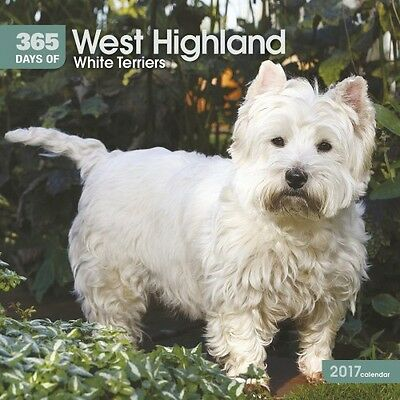 365 Days of West Highland White Terriers Wall Calendar 2017