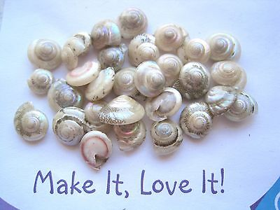 PACK OF 30 Lovely Small Round Shells for Craft PEARL GREEN PINK BLUE Seashells