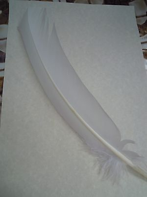 Feather Quill Pen & parchment Set Spell Supplies Spells witchcraft White feather