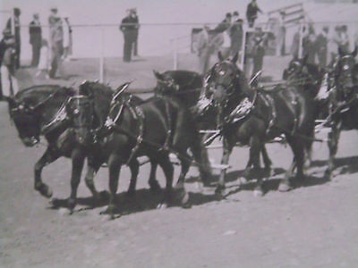 5 x 7 PHOTO - ALBANY CREAMERY ASSN SIX-HORSE DRAFT HORSE HITCH