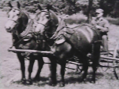 5 x 7 PHOTO - UNKNOWN TWO-HORSE LIGHT DRAFT HORSE HITCH HAY RAKE