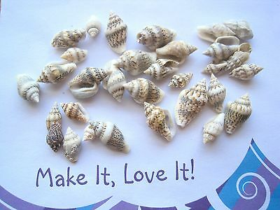 30 x NATURAL Brown White TONES SEASHELLS for Craft 8mm to 20mm Sea Shells Grey