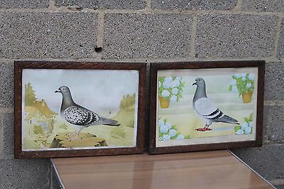 VINTAGE race pigeon dove sporting framed pictures prints 1940 ths