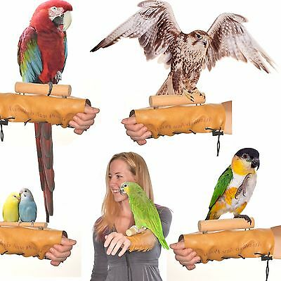 Avianweb™ Arm & Hand Perch - Patent Pending / Made in the USA