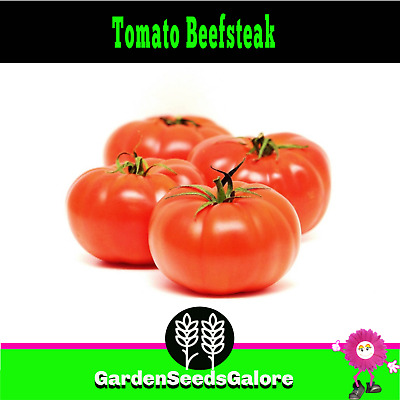 Tomato Beefsteak 25 seeds Heirloom huge tomato