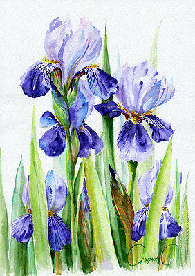 Iris, Flowers, Watercolor Original Painting from the Artist