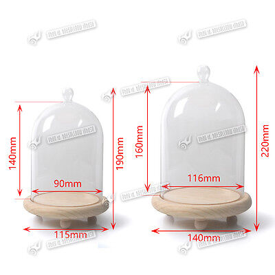 Glass Display Dome Cloche Natural Wood Base Bell Jar Cover Small Large