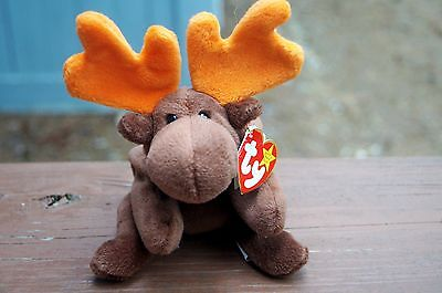 Chocolate the Moose Ty Original 9 Beanie Baby