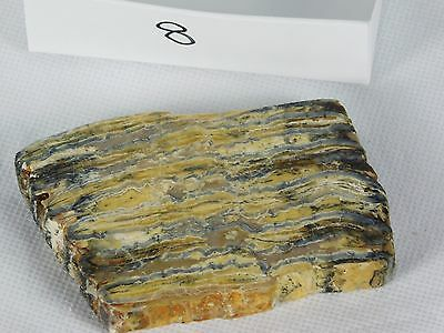 8) Genuine Woolly Mammoth TOOTH Slice Polished Fossil UK - Great Unique Gift