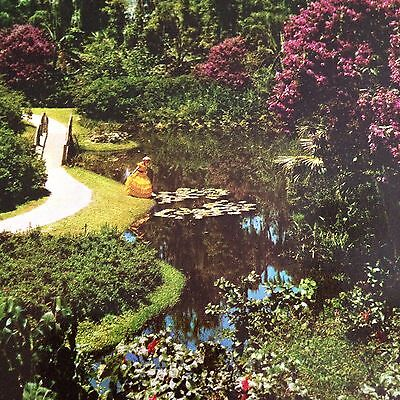 Cypress Gardens Southern Belle Postcard Water Lily Pads Winding Path Unused Vtg
