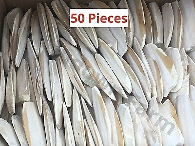 """1KG OF 3"""" to 5"""" CUTTLEFISH BONE PIECES FOR BIRDS AND REPTILES."""