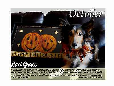 2017 Nvsr Sheltie Rescue Calendar  Help Sheltie Rescue!