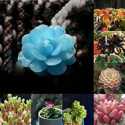 Potted plants Flowers Seeds Succulents Radiation protection Office Desktops  GT-