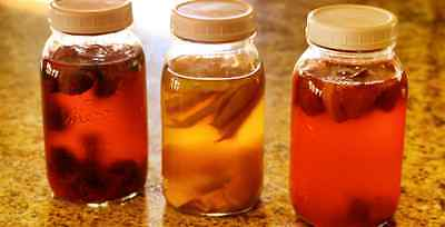 ORGANIC Kombucha XL Scoby Starter & liquid FREE POSTAGE Naturally grown