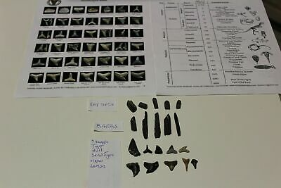 SCHOOL SPECIAL Lot 20 SHARK TOOTH FOSSIL GUIDES LITERATURE RAY TEETH BARBS