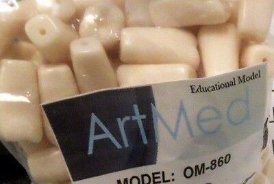 Typodont Replacement Practice Teeth For Model OM-860 Assorted 320 Pcs ARTMED