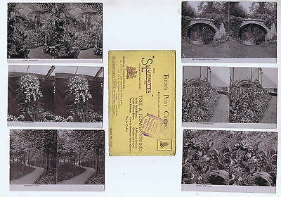 Tree & Flowers Set Of 6  Original Old Tucks Stereoscopic Real Photo Postcards Tz