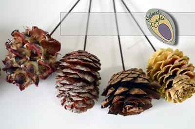 Natural Wired Cones Mixed Packs - Wreath and Christmas Decorations