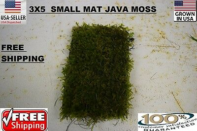 5x3 java moss mat wall plants Easy Aquarium aquascaping planted tank low light