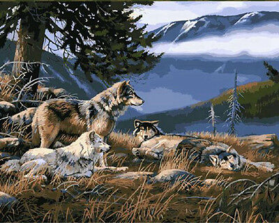"DIY Paint By Number 16""*20"" Kit Cool Wolf On Canvas With Nice Box"