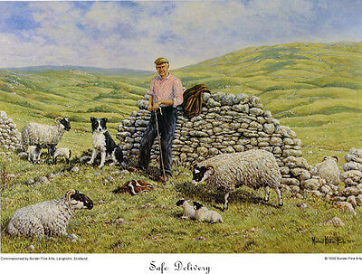 BORDER FINE ARTS - SAFE DELIVERY - sheep lambs shepherd farm countryside PRINT