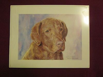Michael Steddum - Limited Chesapeake Bay Retriever Print