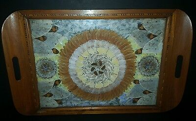Antique Brazilian Butterfly/Moth Wing Taxidermy Wood Parquetry Serving Tray