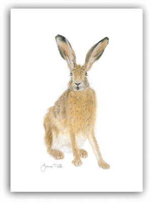 'BROWN HARE' WILDLIFE GREETINGS CARD-From Pencil Drawing By Artist Joanne T Kell