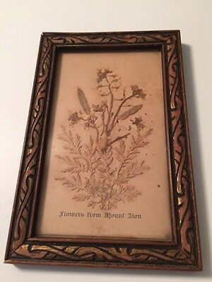 Vintage framed pressed Flowers from Mount Zion