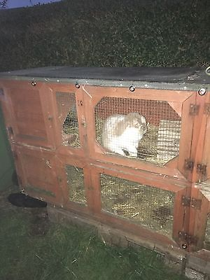 Rabbit Hutch Front Mesh Cage Cover Eyeletted  Clear  Cover 3 Ft X 2 Ft Approx