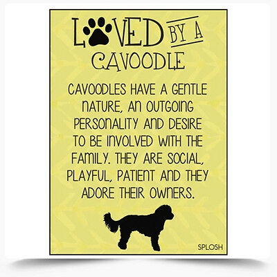 Loved By A Cavoodle Dog Fridge Magnet