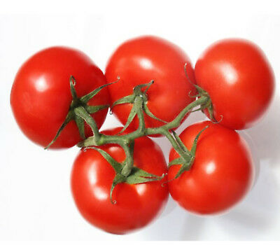 TOMATO Sugar lump 25 seeds gardeners delight heirloom vegetable seeds
