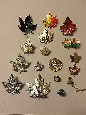 Collection Of 17 Assorted Maple Leaf Brooches, Pins, And Earrings