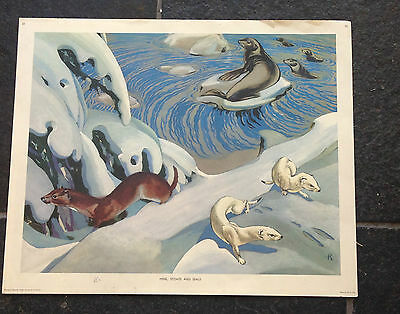 Old Vintage School Educational Nature Poster 1950's Mink Stoats And Seals