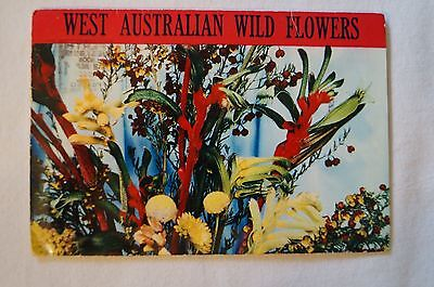 West Australian Wild Flowers - 14 x Photo Sheet - Collectable - Vintage-Postcard