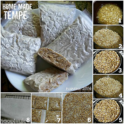 Best Indonesia Tempeh Starter Inoculum Tempe for Homemade Protein Source 75grams