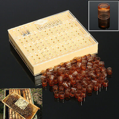 Queen Rearing Cupkit Box Cupularve System Beekeeping Tool + 110 Brown Cell Cups