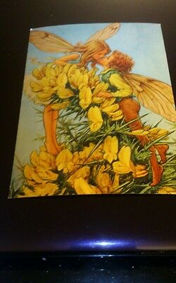 Postcard flower fairies gorse cicely m barker unposted