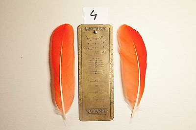 Scarlet Ibis feathers - salmon fly tying - rare exotic feathers