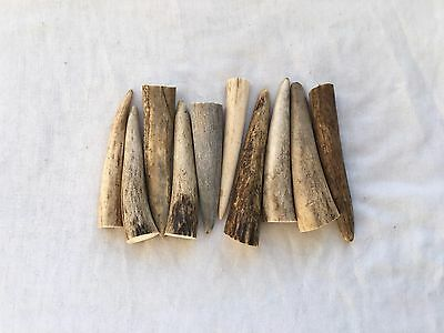 10 Straight Deer Antler Tips, Jewellery Making Crafts Taxidermy Bushcraft LARP