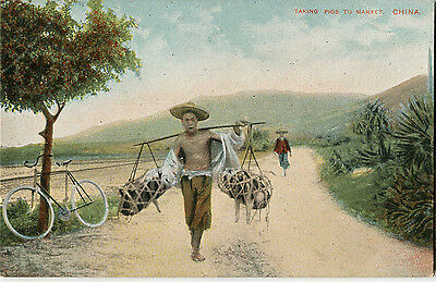 1900s Postcard Farmer carrying pigs to market CHINA