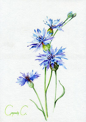 Cornflower, blue, Flowers, Watercolor Original Painting from the Artist