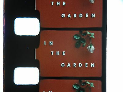 """Standard 8 Mm Colour Home Movie Film """"in The Garden""""  On One 400 Ft Spool"""